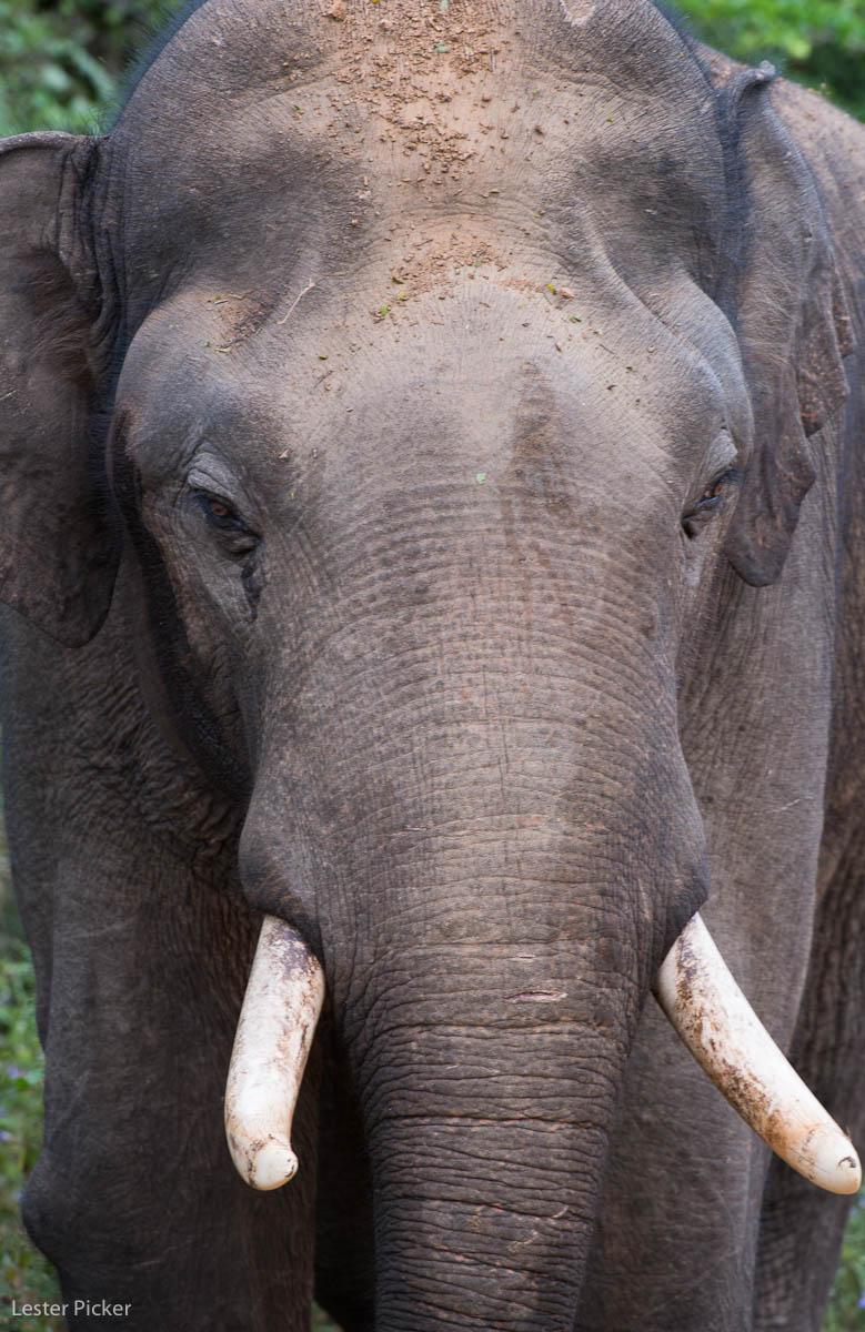 Sri Lanka's Incredible Yala National Park