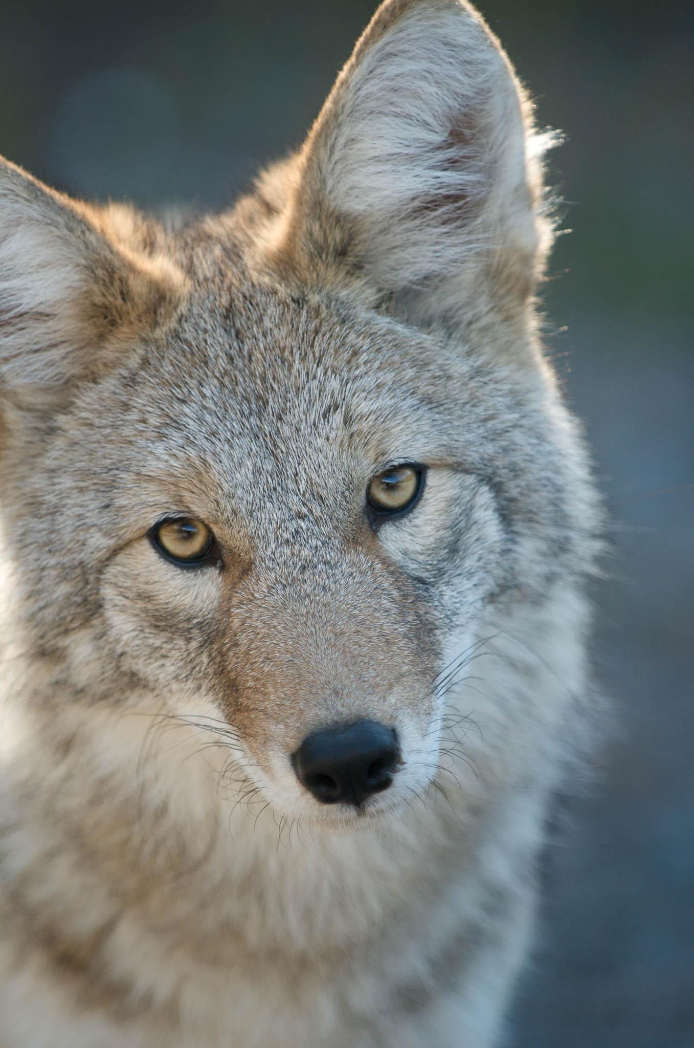 Wildlife Photo Tip #8: Nail the Eyes
